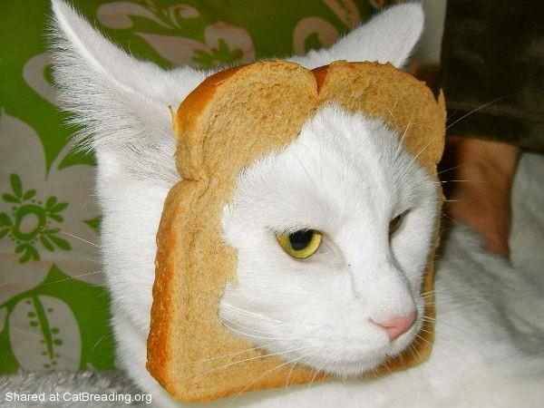 Gayle Tales: In-Bread Meme
