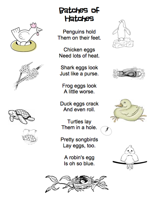 Batches of Hatches poem and word activity. FREE!