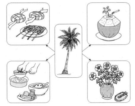 Fun Crayons EduSpace: Ulasan UPSR - Kegunaan Pokok Kelapa