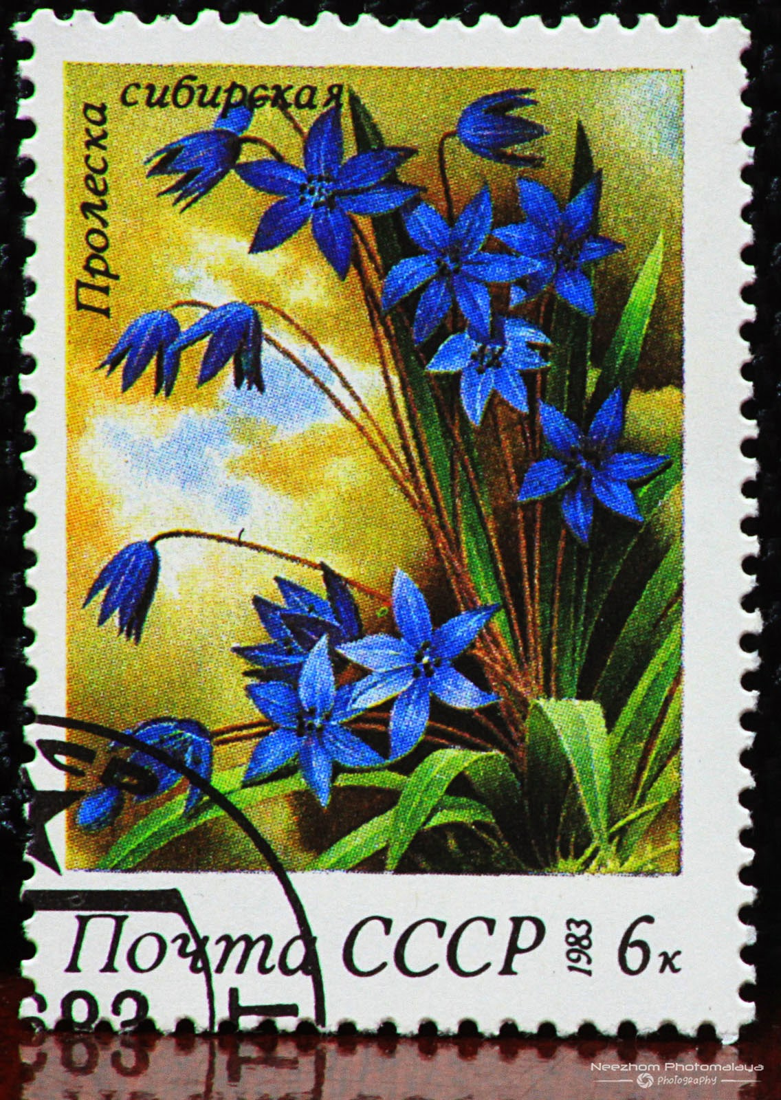 Russia Flowers Stamps Stamps Gallery