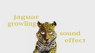 learn animal jaguar sounds