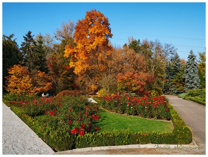 Ogród botaniczny UAM Poznań różanka