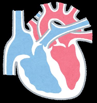 心臓の断面のイラスト