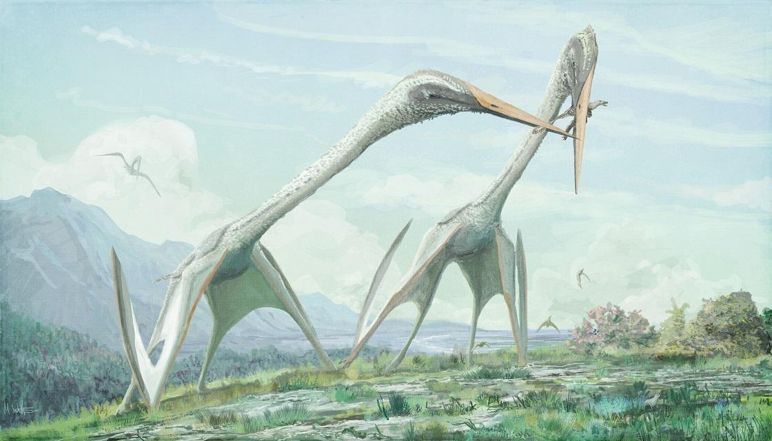 Hatzegopteryx Size Mark Witton.com Blog: ...