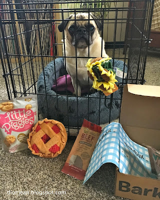 Liam the pug with his BarkBox treats