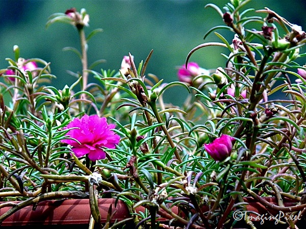 #DigitalPhotography Colors of DMC-FZ18 #I 04