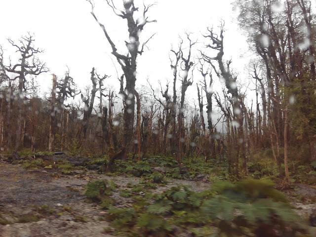 Alrededores del sendero al volcán Chaitén en Parque Pumalín, Chile