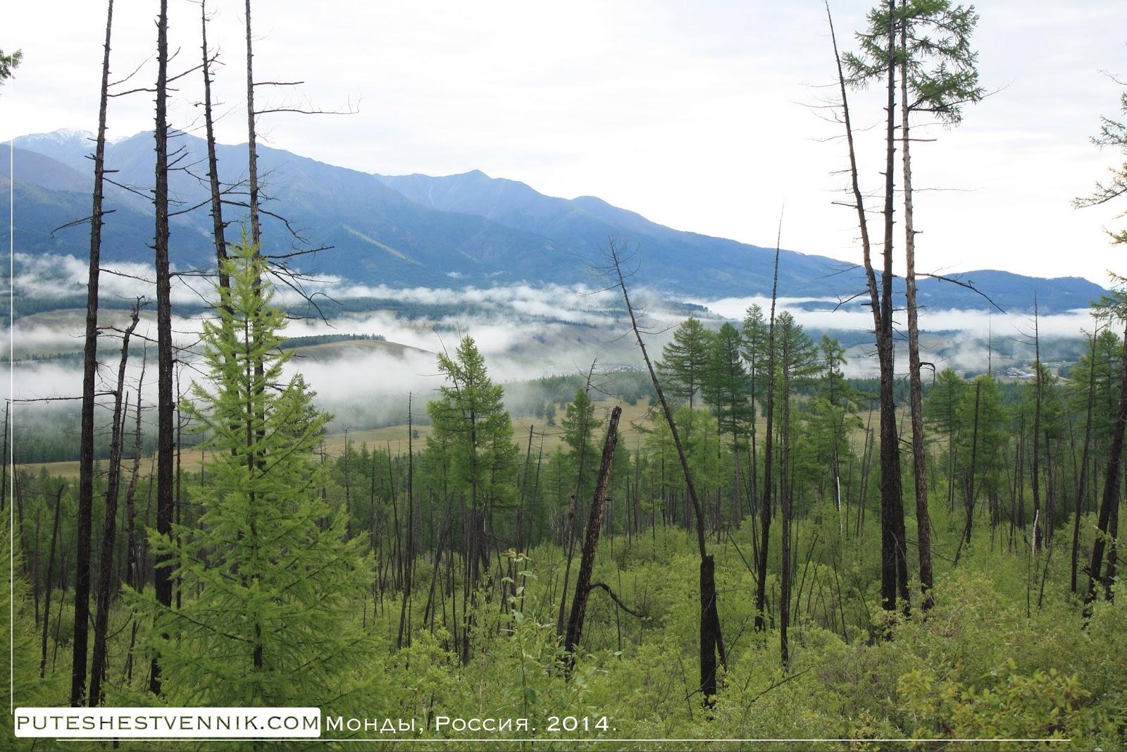 Тайга и горы на границе с Монголией