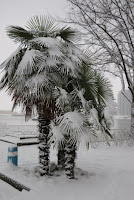 Palm Trees in the Snow