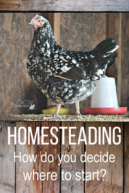 Homesteading: how on earth do you decide where to start when you're a beginning homesteader?