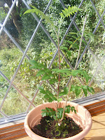 Velvet, toilet tissue, gardening, tree