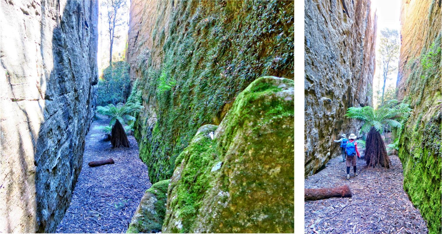 Mountains: Donkey Mountain (North-East Maze), Gardens of ...