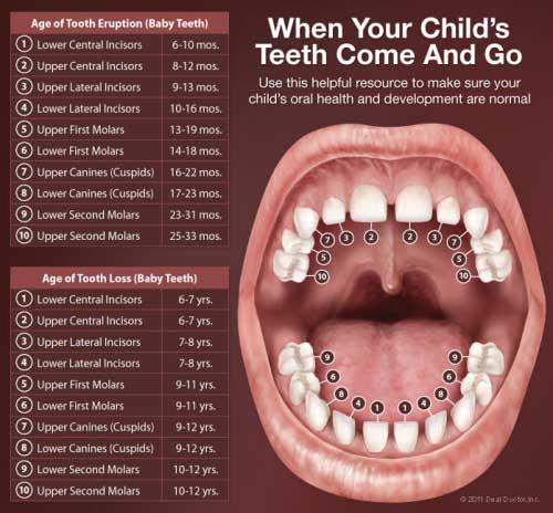 Pertumbuhan gigi bayi