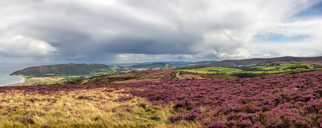 Bright purple heather and the sweep of Porlock Bay in Exmoor National Park