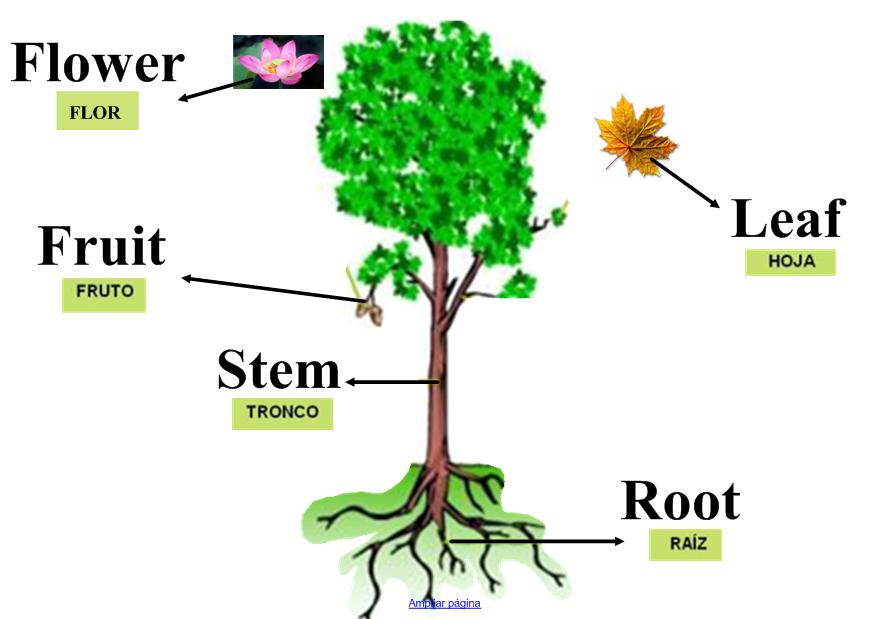 English blog su rez somonte parts of the plant for Las partes de un arbol en ingles