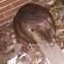 State Police rescue Bethlehem Steel beaver