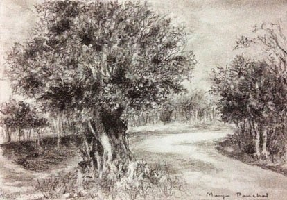 Charcoal sketching of tree at Kharghar Central park by Manju Panchal