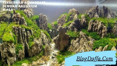 Perbedaan Aquascape dengan Akuarium Biasa