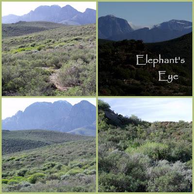 Karoo Desert NBG landscape