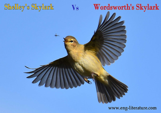 "Compare and contrast Shelley's ""To a Skylark"" with Wordsworth's ""To the Skylark""."