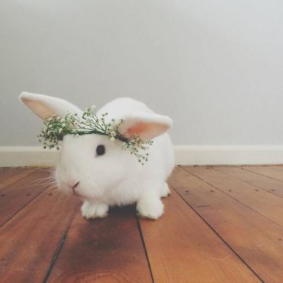 white rabbit happy easter