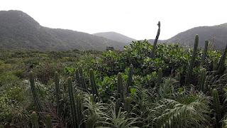 Restinga Meio Ambiente Definição:  O que é Produto Interno Verde (PIV)?