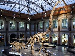 5 Museum Dinosaurus Paling Keren Di Dunia