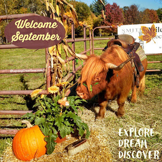 baby highland cattle cow in a fall scene