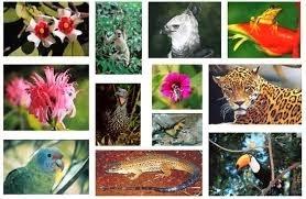 Biodiversidade e e Seu Potencial Econômico