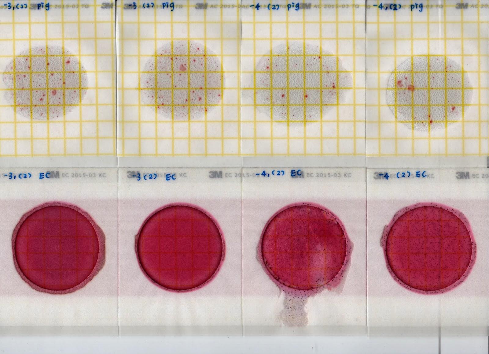 阿原開放式課程One Dollar's Open Courseware: 使用 3M Petrifilm 檢測片測定菌數02
