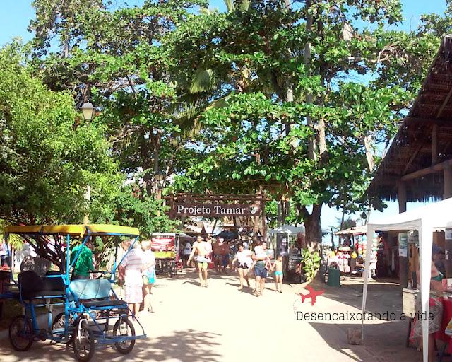 Projeto Tamar | Praia do Forte