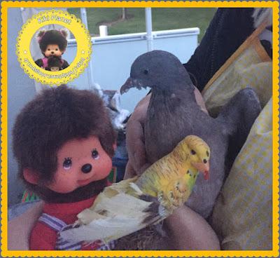 Popi le Monchhichi et Colombine le bébé pigeon - pigeonneau - oiseau -oisillon - gavage
