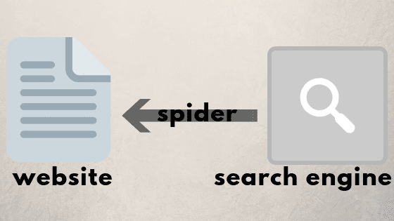How Google spider work?
