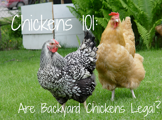 are chickens legal