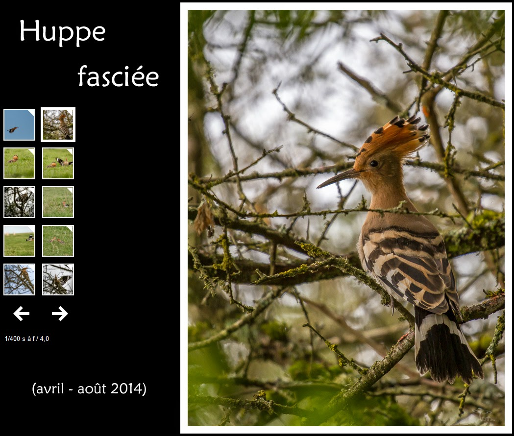 http://instantalautre.free.fr/galeries2014/faune/huppe/