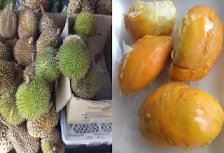 durian%2Bmini%2B-%2B3.jpg