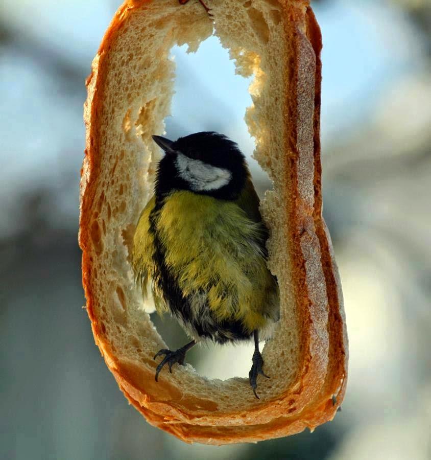 kuş-besleyici