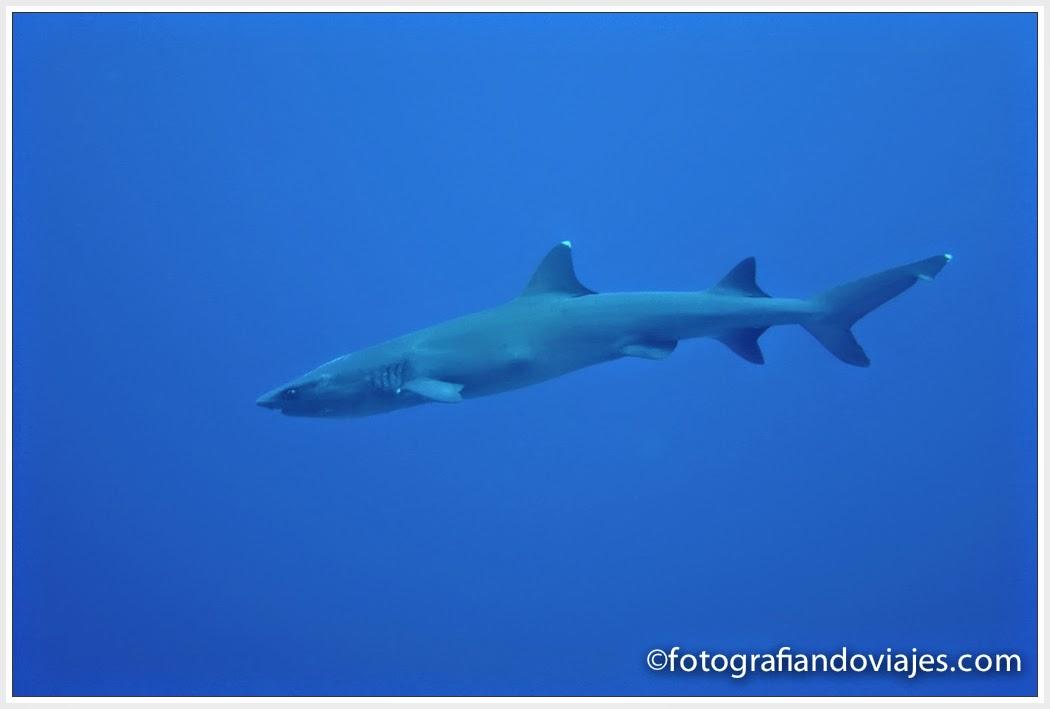Buceo en Layang Layang en Malaysia. tiburon