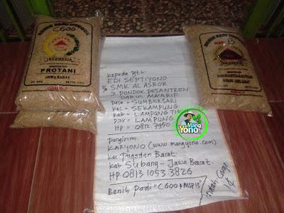 Benih Padi Pesanan    EDI SEPTIYONO Lamtim, Lampung    Benih Sebelum di Packing.