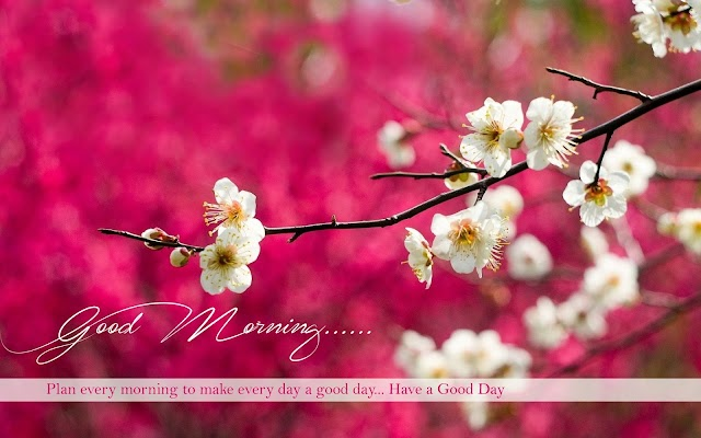 "Hi Guys G O O D M O R N i N G ""Plan every morning to make every day have a a nice day """