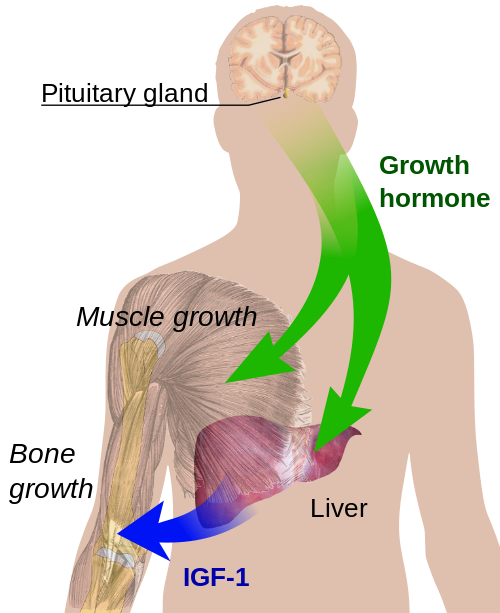 growth_hormones