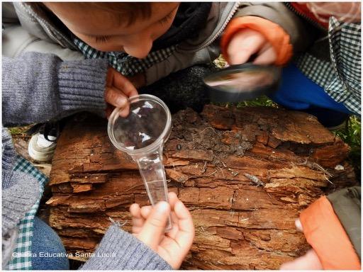 Niños observando bichitos de la humedad en un tronco caído - Chacra Educativa Santa Lucía