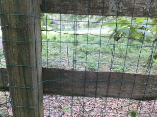 Garden Zone 48x50 Green Vinyl 3x2 16-Gauge Garden Fence