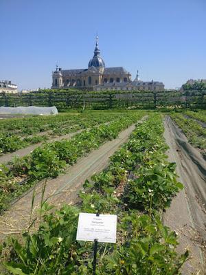 Jardin potager- Paris à l'ouest-Le Potager du Roi-Versailles