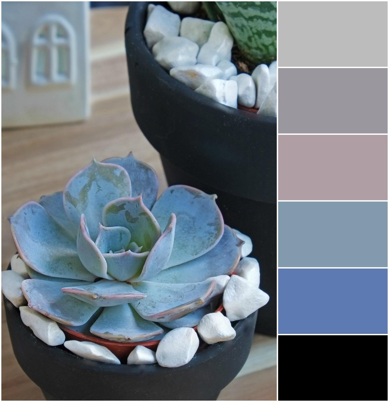 Kleurenpaletten, inspiratie met vetplant - Interieur ideeën