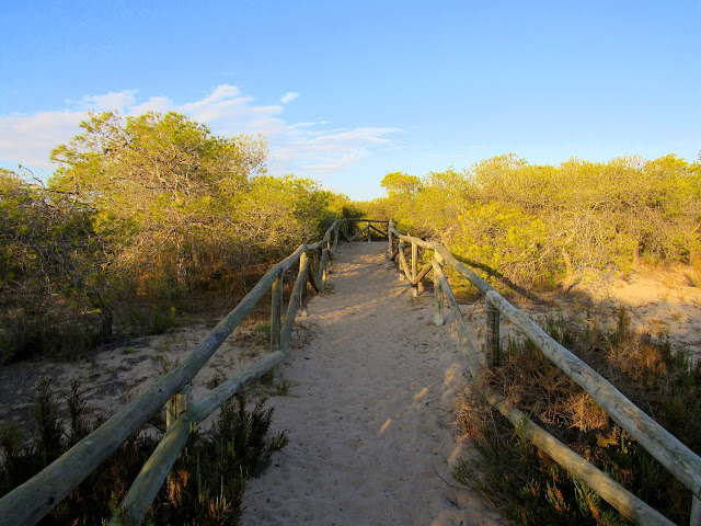 Camino entre dunas