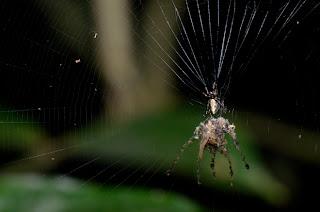 L'affaire des répliques d'araignée
