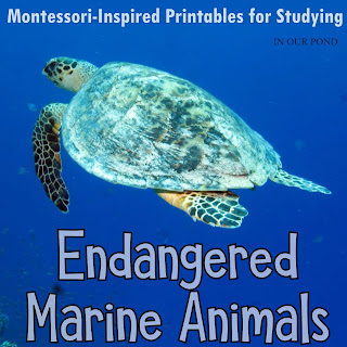 Endangered Marine Animals 3-part Cards from In Our Pond #montessori #printable #homeschooling #montessoriathome #montessorischool #school #marine #safaritoob #howisafari