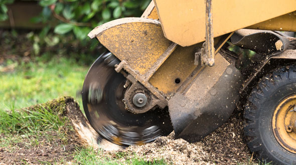 Tree stump grinding for root removal