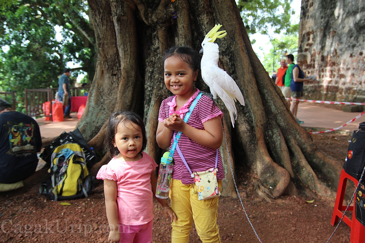 Foto bersama burung kakatua di puncak A'Famosa, Melaka, Malaysia